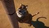 《動物園之星》游戲實機演示宣傳片 動物憨態可愛