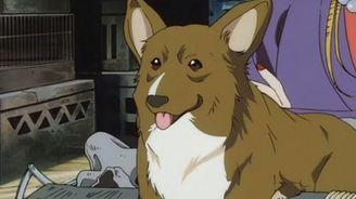 柯基犬演員加入Netflix真人版《星際牛仔》劇組