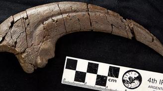 科學家從1億年前的恐龍化石中發現巨大爪子