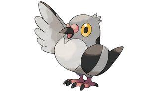 《寶可夢:劍/盾》圖鑒——豆豆鴿