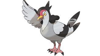 《寶可夢:劍/盾》圖鑒——咕咕鴿