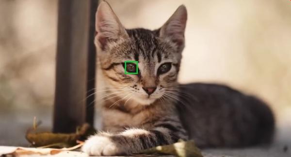 猫狗博主有福了 索尼A7 III和A7R III增加动物眼部对焦功能