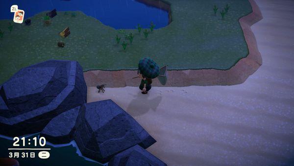 在《動森》中你捕的這種狼蛛,其實是一種保護物種