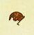 《集合啦!動物森友會》10月南半球生物圖鑒